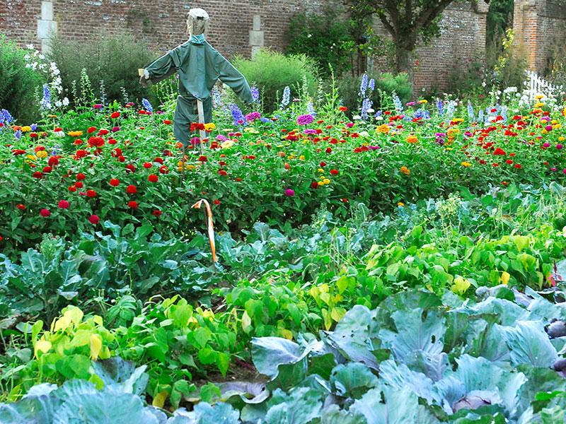 Samodling av blommor och grönsaker som potager