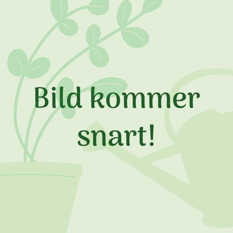 Multiredskap Klara Twool, green-Klara Twool - Trädgårdsredskap, grön färg