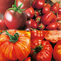 Wexthusets tomatmix-wexthusets tomatmix med frö till fyra helt olika sorters tomater