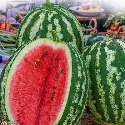 Melonfrö till vattenmelon och söt melon