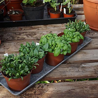 Odlingsprodukter för odling av växter inomhus och utomhus