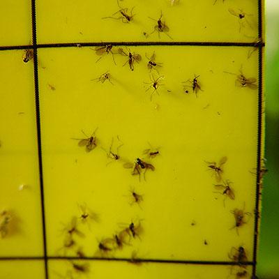 Redskap och växtskydd mot ohyra och skadegörare