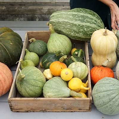 Frö till pumpa, squash och zucchini
