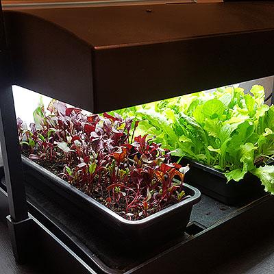 Odlingsstationer för inomhusodling