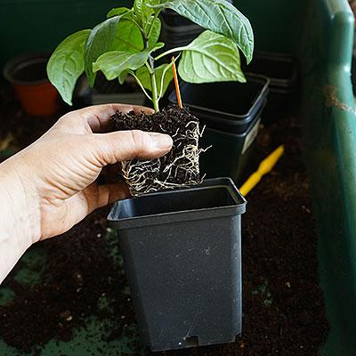Planteringkrukor runda och fyrkantiga